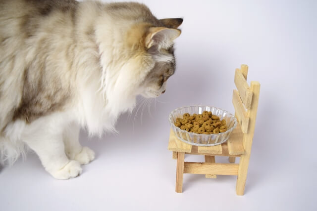 猫が餌皿をひっくり返すのはなぜ?2