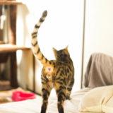 猫の恋、にゃんたまと去勢の関係