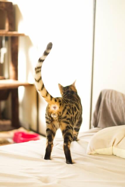 03猫の去勢とニャンタマ