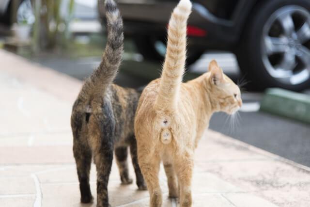 03猫の去勢とニャンタマ2