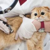 猫から移る感染症が気になる