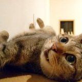猫の気分はコロコロ変わる